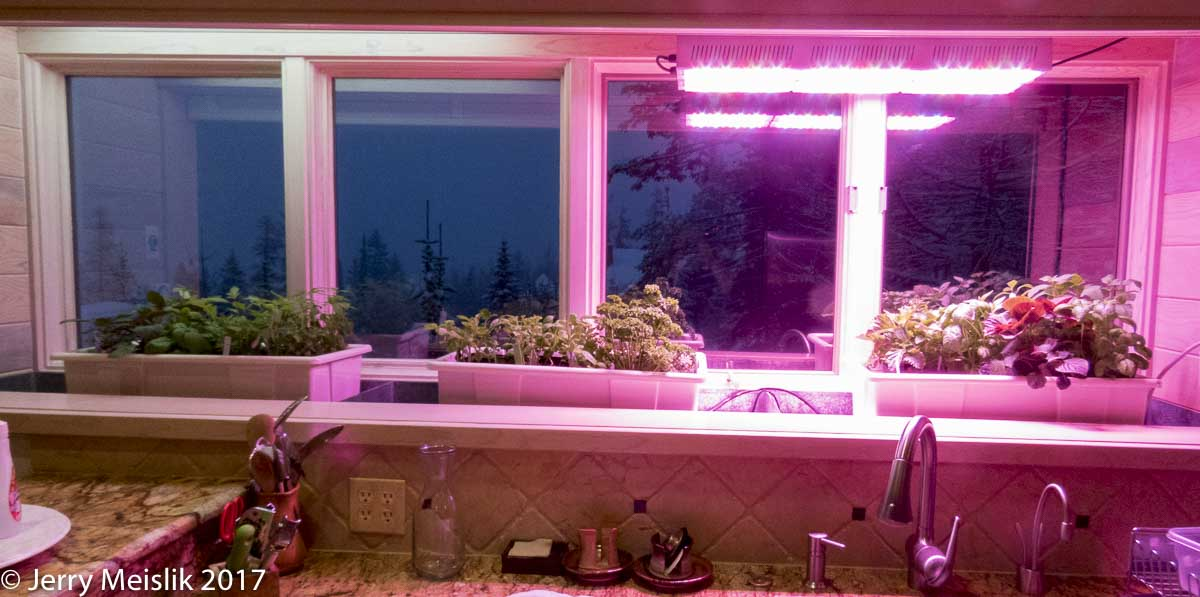 World-Renowned Bonsai Expert Jerry Meislik uses Active Grow SG300 Grow Light in his Home