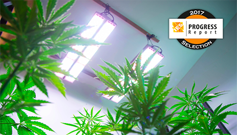 Active Grow SG300 First Horticulture LED Luminaire Featured in the IES Progress Report