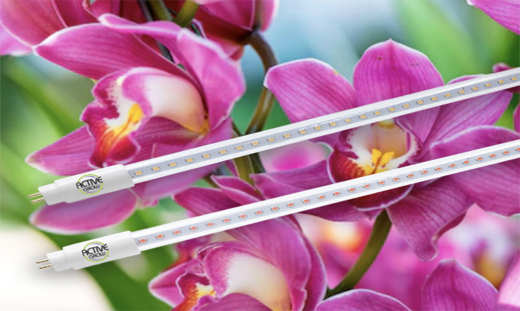 Active Grow LED Lights Review By A'na S'atara of Ancient Energy Orchids